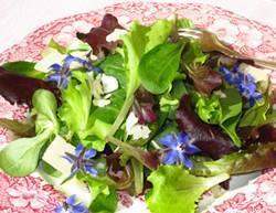 Borragine in insalata