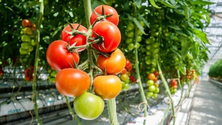 verdure di stagione di agosto