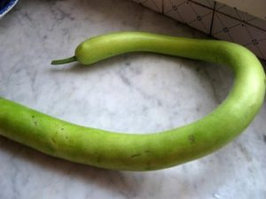 zucchina frescherella